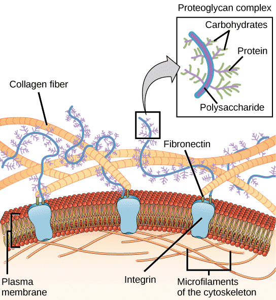 Skincare role in complex skin structure