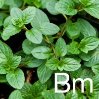 Black Mint (Mentha Piperita Extract) Ingredient Image