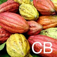 Cocoa Butter (Theobroma Cacao Seed Butter) Ingredient Image