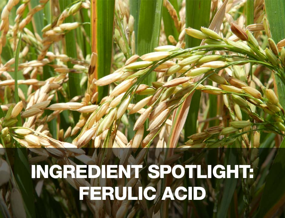 Ingredient Spotlight - Ferulic Acid