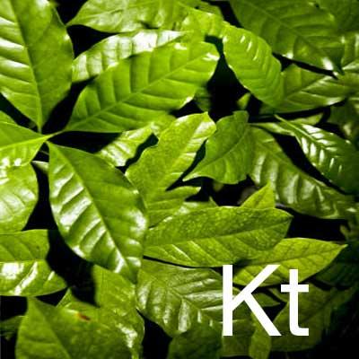 Katrafay (Cedrelopsis Grevei Bark Extract) Ingredient Image