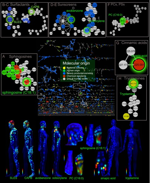 Molecular cartography of human skin