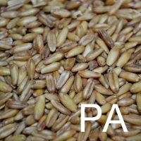 Phytic Acid Ingredient Image