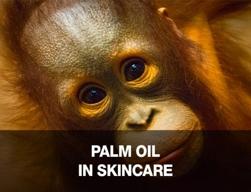 Palm Oil: Is Your Skincare Killing Orangutans?