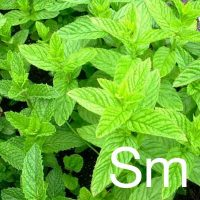 Spearmint (Mentha Spicata Herb Oil) Ingredient Image