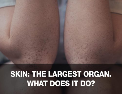 The skin is a very important (and our largest) organ: what does it do?
