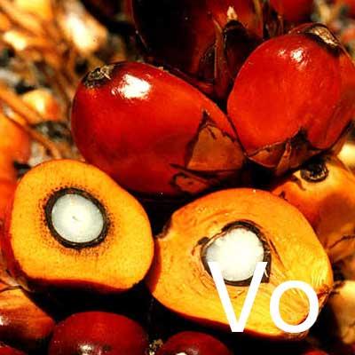 Hydrogenated Vegetable Oil Ingredient Image