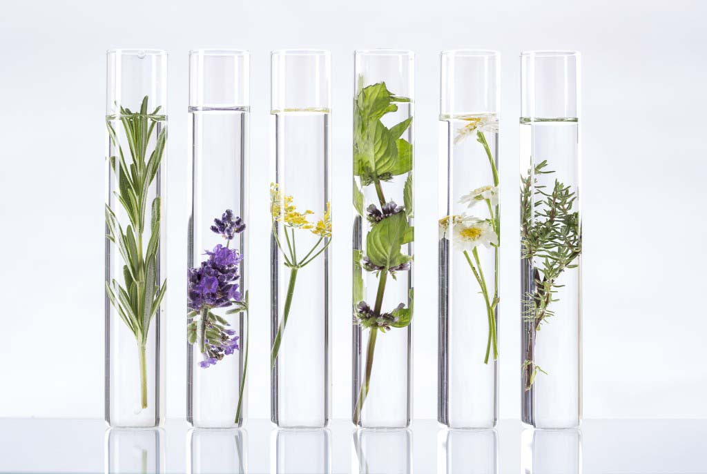 Natural Ingredients used in Extraordinary Skincare Range